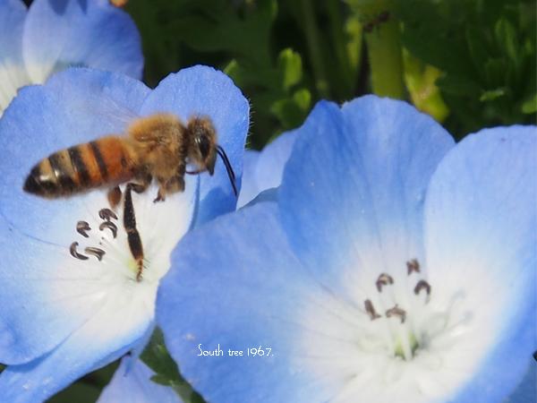 Honeybee1ブログ用