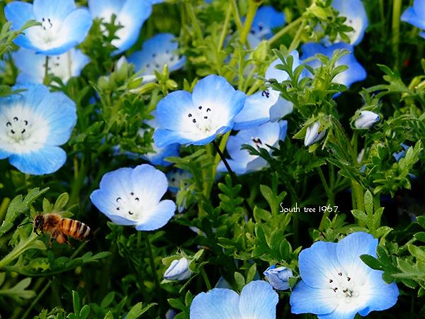 Honeybee2ブログ用