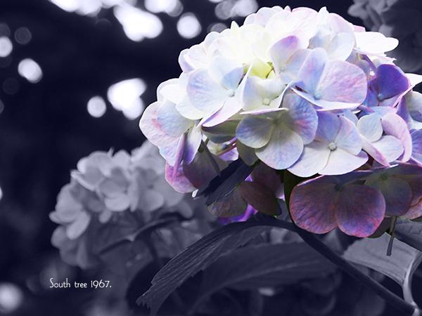 20160625浅草ブログ用8