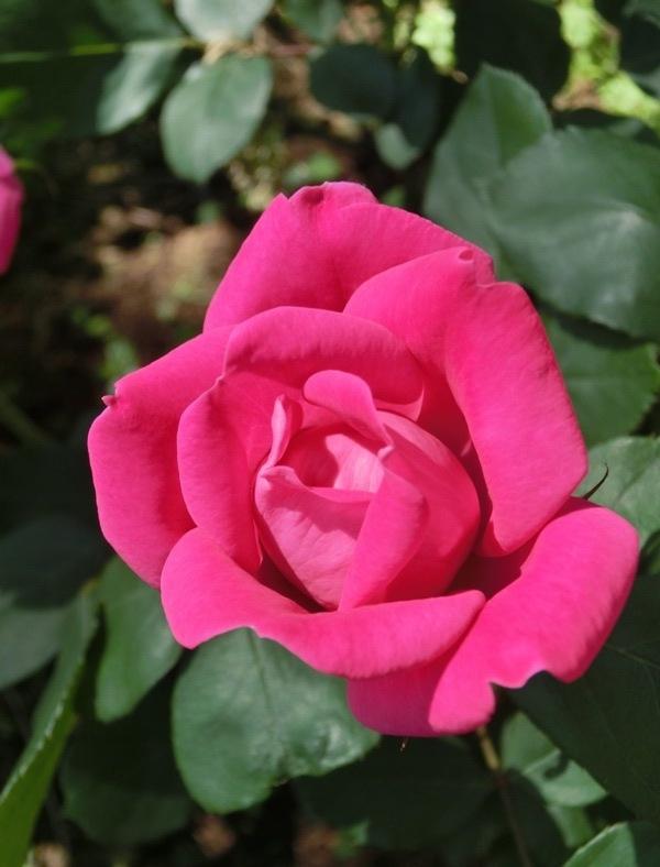 20150520_pink_DK02.jpg