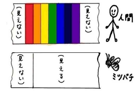 人間と虫の見える色