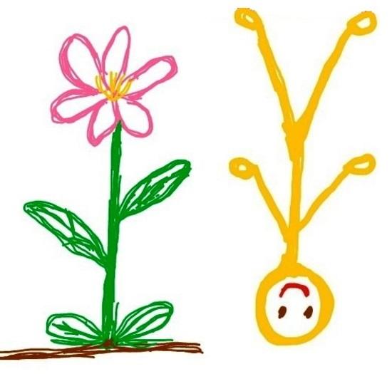 植物と人間_逆立ち