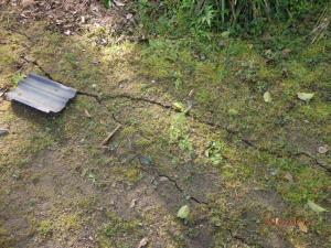 P4152073 庭の地盤沈下