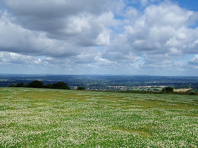 400pxField of Clover and View Ditchling Beacon by amandabhslater