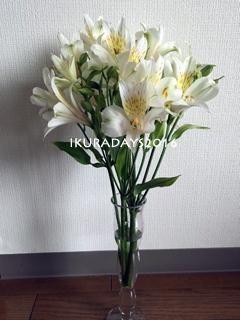 20160510_flower.jpg