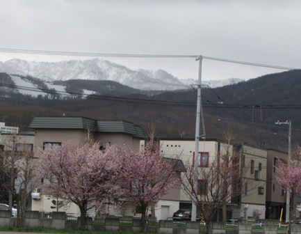 後ろのお山がまっ白