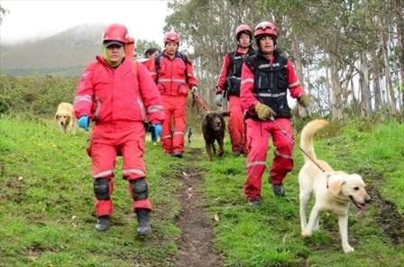 過労死の捜索犬