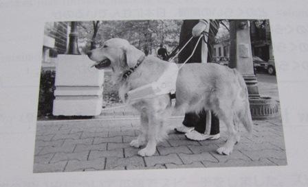 盲導犬の話題が
