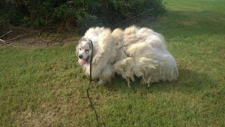 16キロもの毛