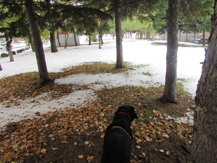 落ち葉と雪と