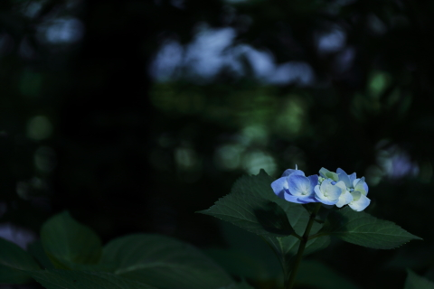 06_72_7453.jpg