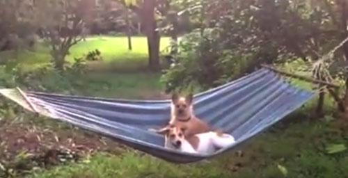 愛犬物語の画像