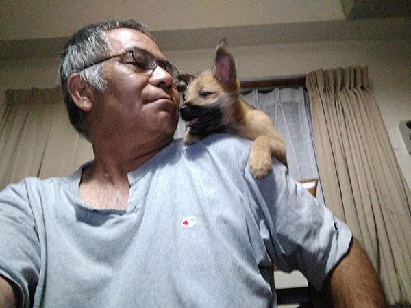 愛犬サンシンの赤ちゃん 愛犬物語の写真
