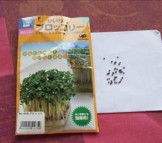 カイワレブロッコリー種