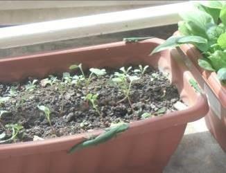 緑トカゲとプランタ(1)