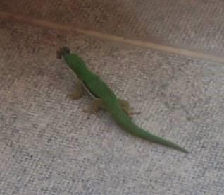 緑トカゲ虫を捕まえる(1)