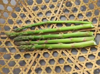 アスパラガス収穫物4月
