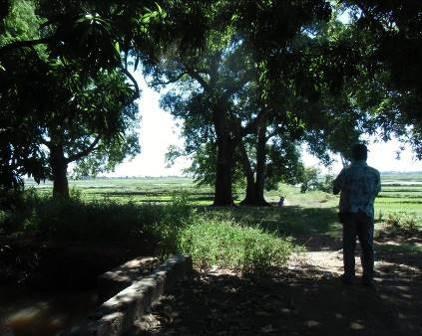 マダガスカル・マジュンガの水田2