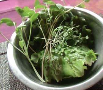 生野菜サラダプランタ栽培の