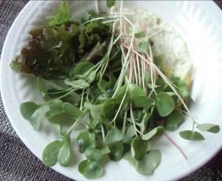 ソバの芽入り野菜サラダ
