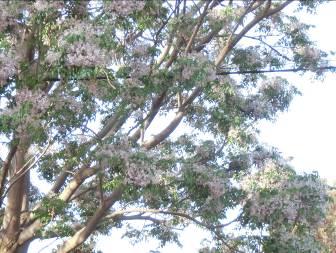 花も実もある木2