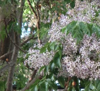 花も実もある木3
