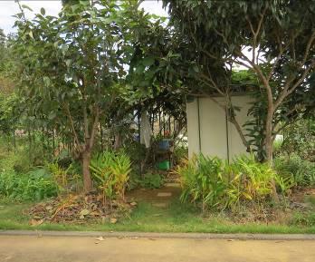 菜園果樹入口10月