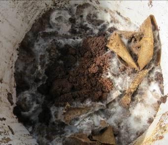 生ゴミ発酵の様子