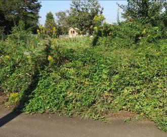 荒れ地菜園1