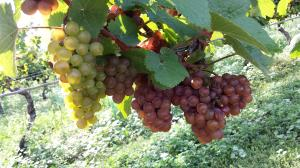 winery03