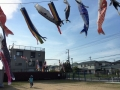 160502 鯉のぼり02