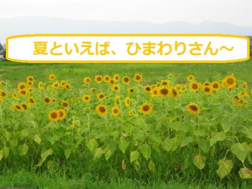 IMG_5229_convert_20160718162743.jpg