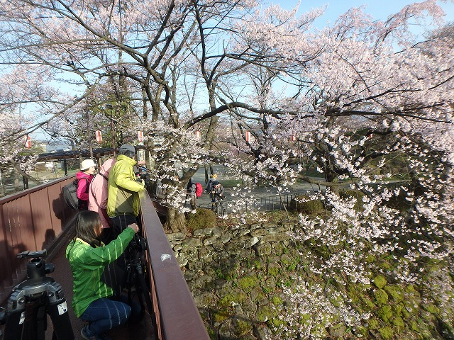 20160409高島城の桜 (27)