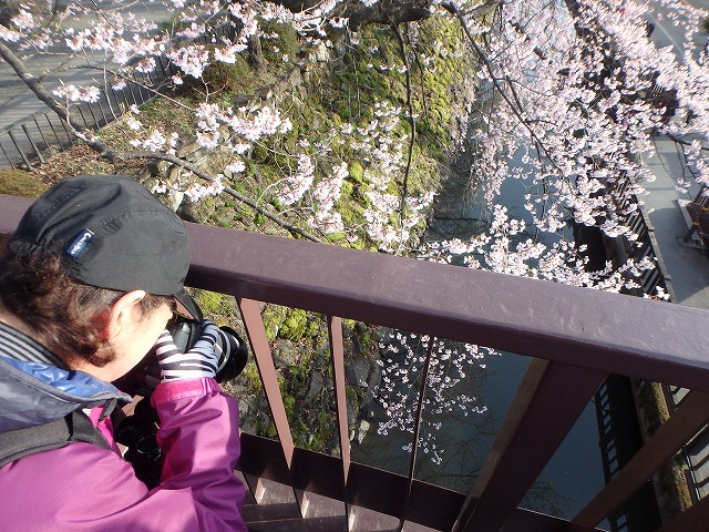 20160409高島城の桜 (29)