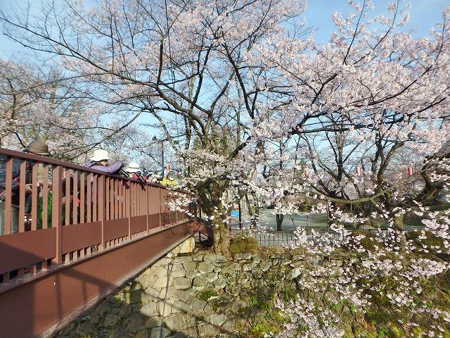 20160409高島城の桜 (31)
