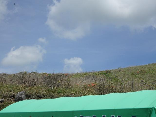 20160611富士見台のレンゲツツジ (6)