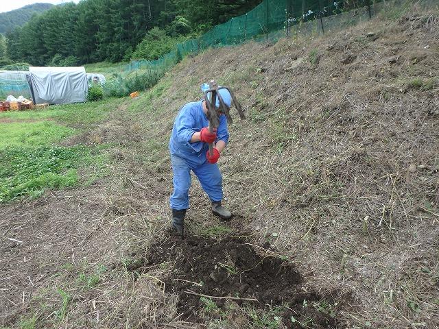 20160626川岸の畑の草刈 (26)