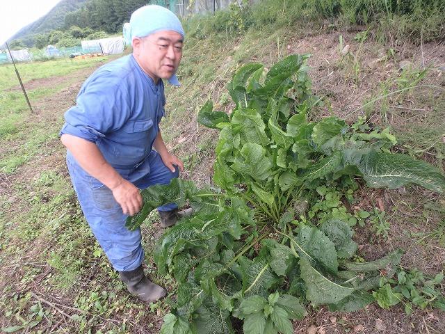 20160626川岸の畑の草刈 (4)