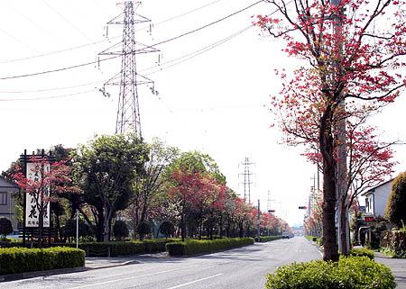 花水木 通り1