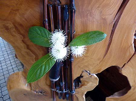 ミズキ科の花木