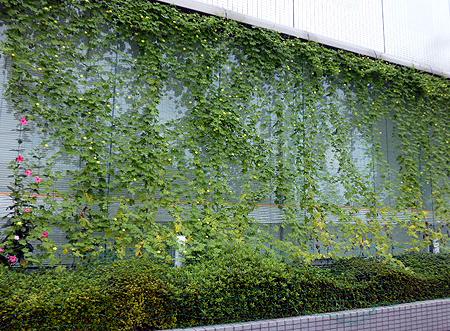 信金緑のカ-テン