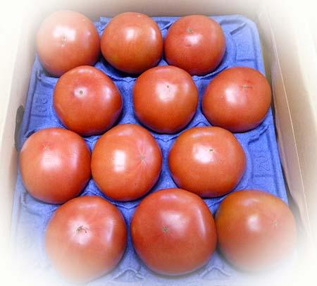 トマト便り