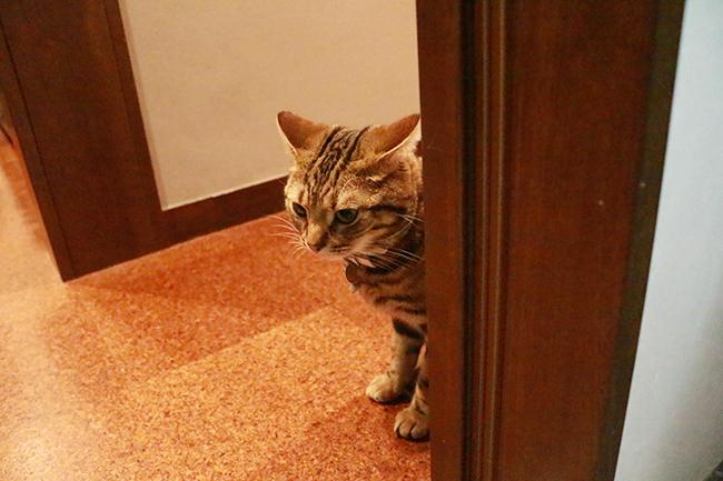 blog_000008112.jpg