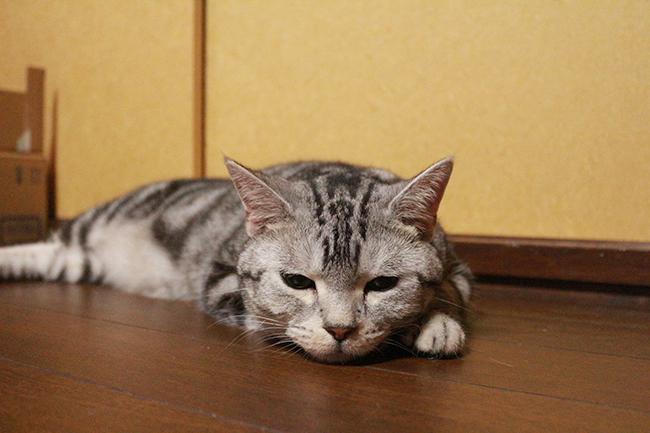 blog_000008454.jpg