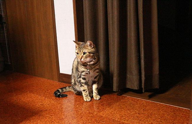 blog_000008460.jpg