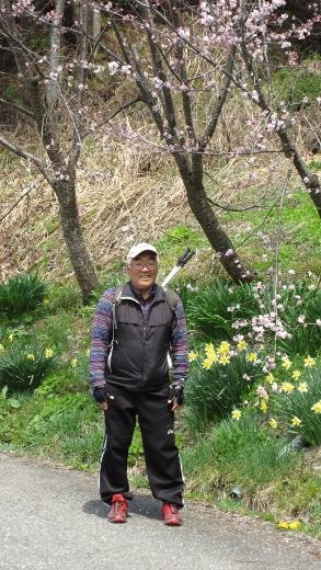 4月16日小谷村水仙街道をまめったクラブで歩く (8) (293x520)
