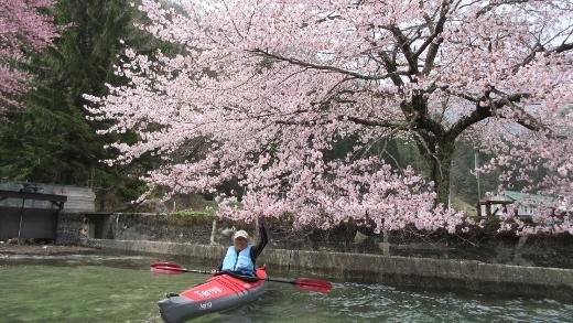 4月24日青木湖花見カヌー (4) (520x293)