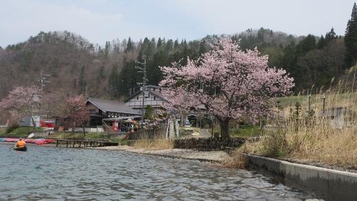 4月24日青木湖花見カヌー (5) (520x293)