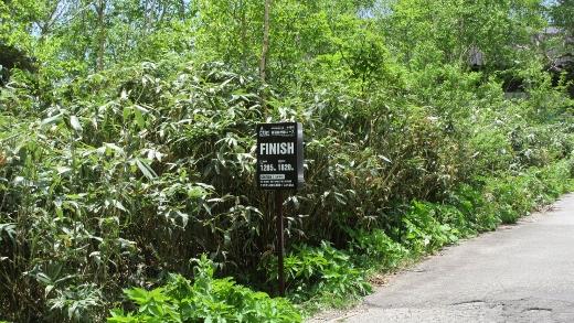 6月18日栂池自然園コース (6) (520x293)