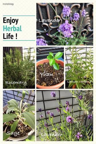 herballife-001.jpg